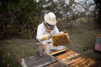 A Beekeeper's Sweet Story